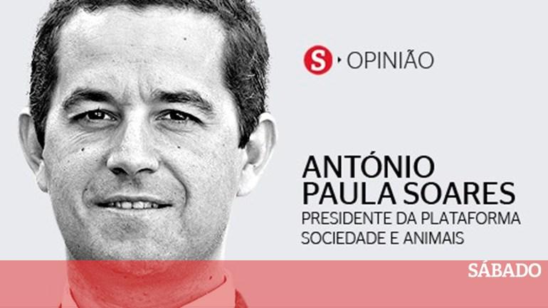 Porque querem acabar com o eucalipto  - António Paula Soares - SÁBADO 4a22c59aa62