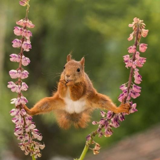 Conheça os finalistas do prémio Funniest Wildlife Photos de 2018